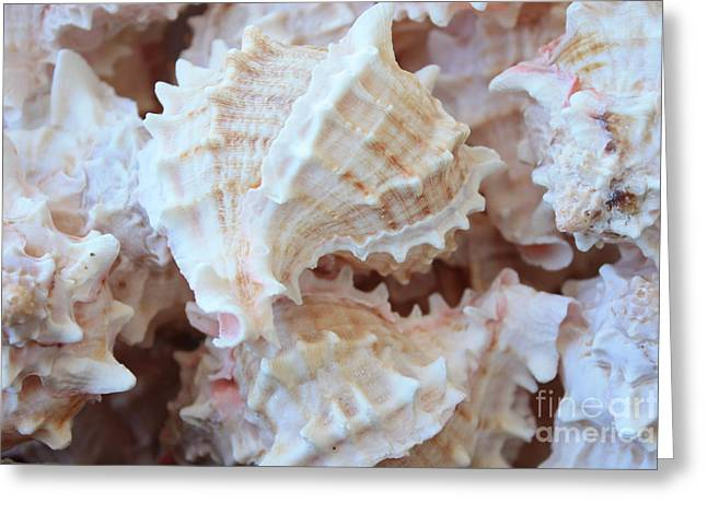 Subtle Colors Greeting Cards - Conches Greeting Card by Carol Groenen