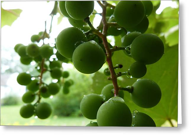 Concord Grapes Digital Greeting Cards - Concord grape Greeting Card by Design Online