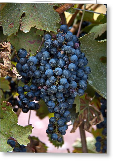 Concord Grapes Digital Greeting Cards - Concord Grapes Greeting Card by Leeon Pezok