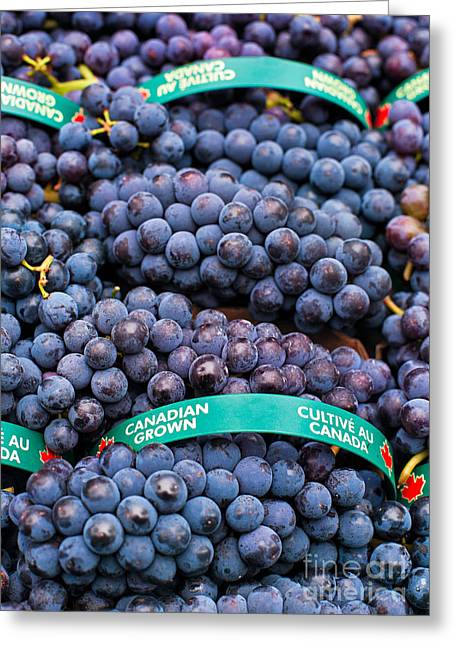 Concord Grapes Greeting Cards - Concord Grapes Greeting Card by Mary  Smyth