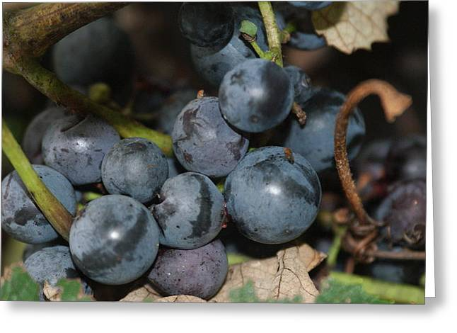 Concord Grapes Greeting Cards - Concord grapes Greeting Card by Rob Luzier