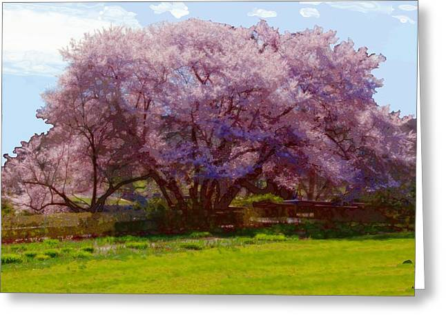 Concord Digital Greeting Cards - Concord Spring Greeting Card by John Feiser
