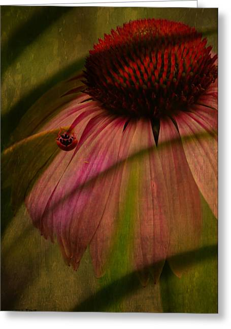 Alabama Greeting Cards - Cone Flower and The Ladybug Greeting Card by Lesa Fine