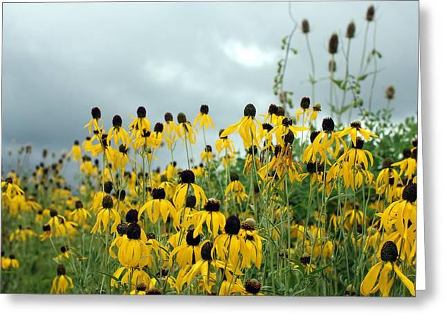 Weed Pastels Greeting Cards - Cone Flower Field Greeting Card by Jackie Novak
