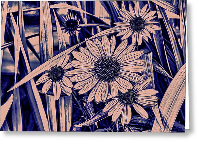 Flower Art Greeting Cards - Cone Flower French Blue Cottage Greeting Card by Lesa Fine