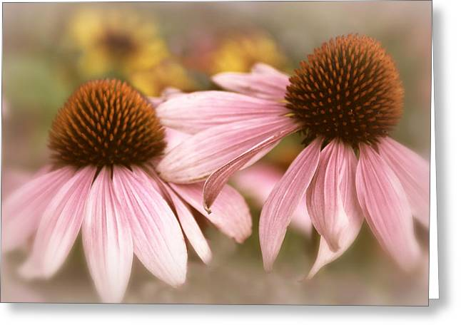 Cone Flowers Greeting Cards - Cone Flowers Greeting Card by Jessica Jenney
