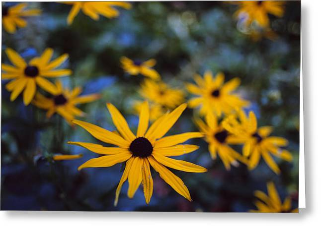 Imaginative Greeting Cards - Cone Flowers Greeting Card by Marcio Faustino