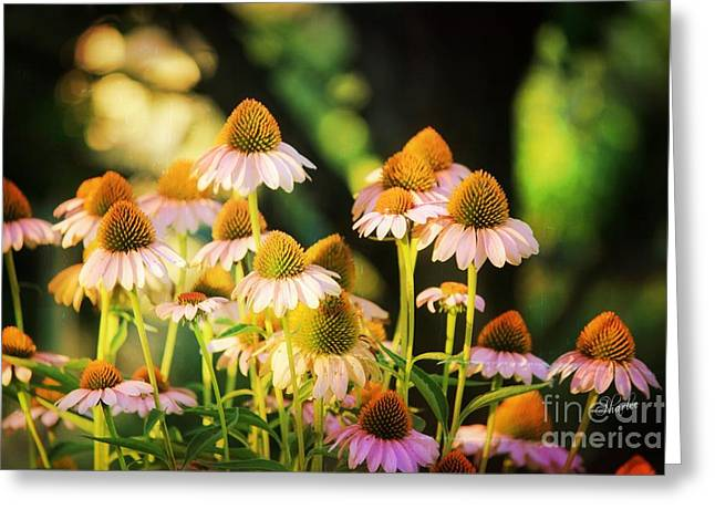 Cone Flowers Greeting Card by Sharon Johnston