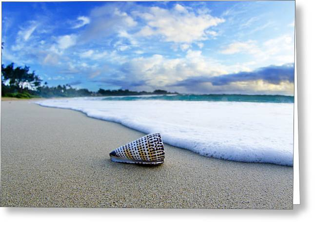 Sea Shell Greeting Cards - Cone Foam Greeting Card by Sean Davey
