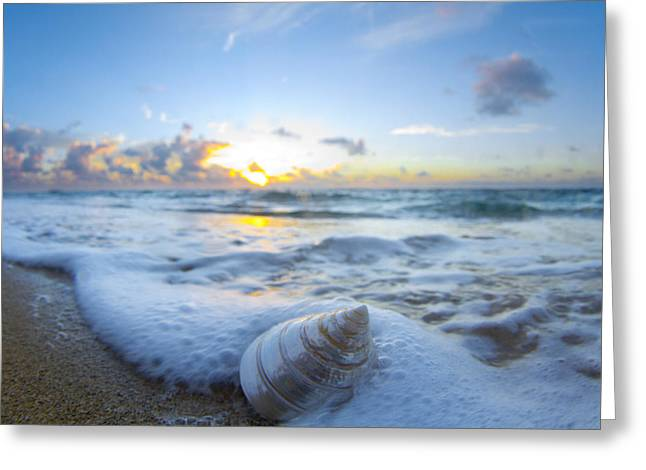 Seascape Art Greeting Cards - Cone Shell Foam Greeting Card by Sean Davey