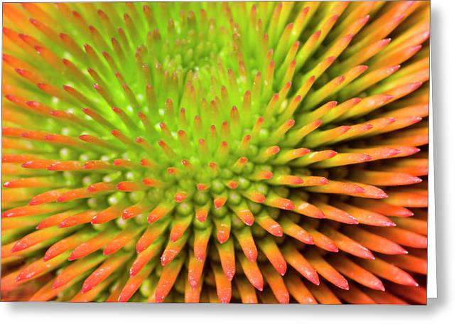 Coneflower Abstract Greeting Card by Nigel Downer