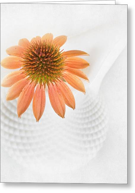 Cruet Greeting Cards - Coneflower and Milkglass Greeting Card by David and Carol Kelly