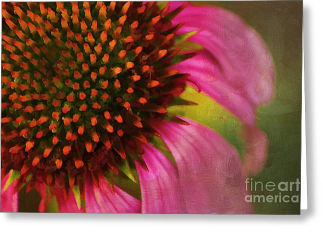 Close Focus Floral Greeting Cards - Coneflower Greeting Card by Darren Fisher