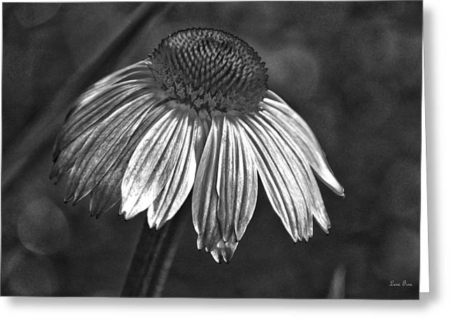 Huntsville Greeting Cards - Coneflower HDR Art BW Greeting Card by Lesa Fine