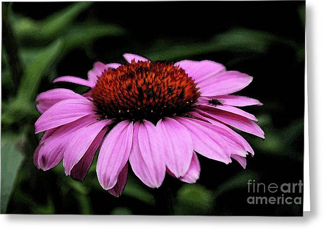 Abstracted Coneflowers Greeting Cards - Coneflower With Bug Greeting Card by Christiane Schulze Art And Photography
