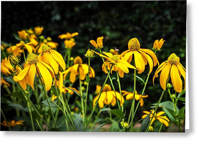 Abstracted Coneflowers Greeting Cards - Coneflowers Echinacea Yellow  Greeting Card by Rich Franco
