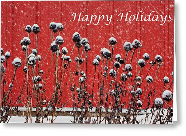 Steel Greeting Cards Greeting Cards - Coneflowers in Winter Greeting Card by Nikolyn McDonald