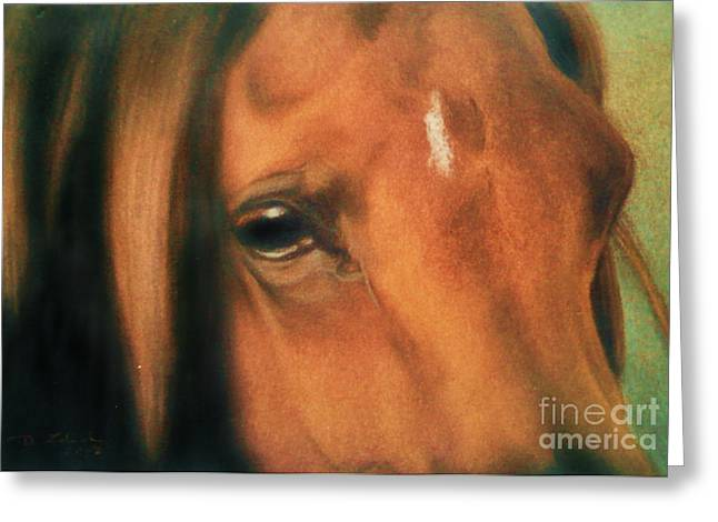 Equestrian Prints Pastels Greeting Cards - Confidence - eye arabian horse Greeting Card by Dorota Zdunska