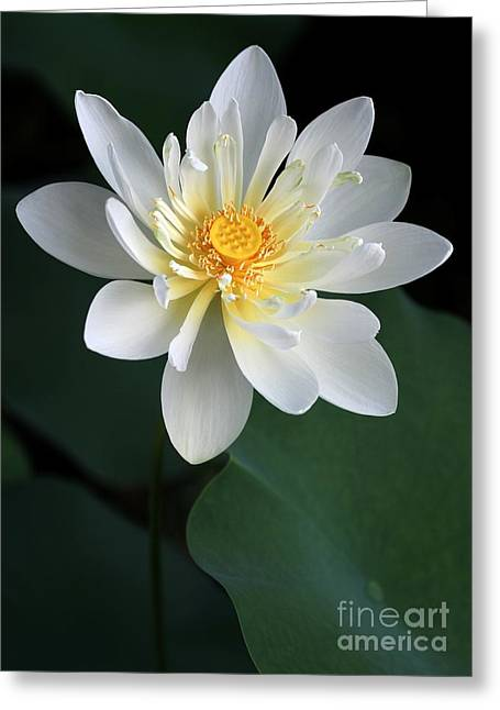 Water Garden Greeting Cards - Confidence Greeting Card by Sabrina L Ryan