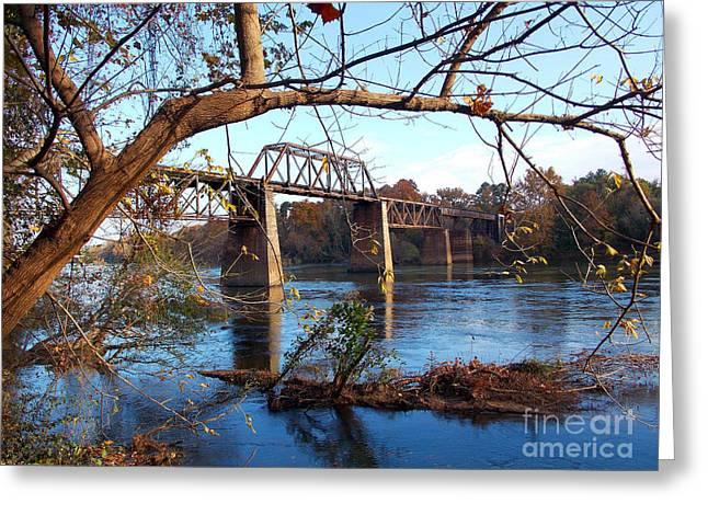 Scenic Tours Greeting Cards - Congaree Autumn Greeting Card by Skip Willits