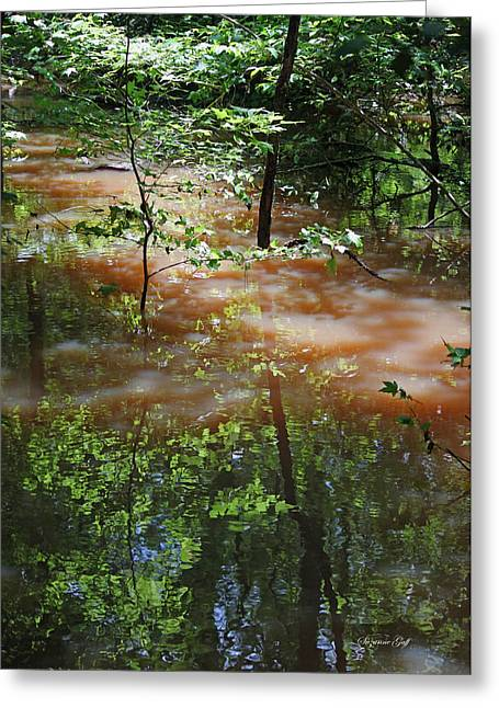 Dappled Light Greeting Cards - Congaree Swamp in Flood Conditions Greeting Card by Suzanne Gaff