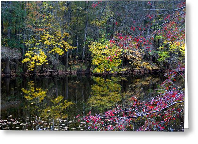 Landscap Greeting Cards - Congaree Swamp Greeting Card by Skip Willits