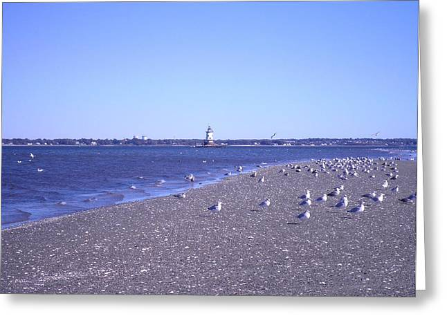Kate Gallagher Greeting Cards - Conimicut Point Lighthouse Seagulls Sand and Shells Greeting Card by Kate Gallagher