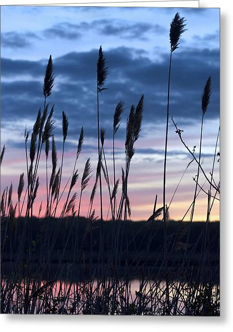 Connecticut Sunset With Reeds Series 4 Greeting Card by Marianne Campolongo