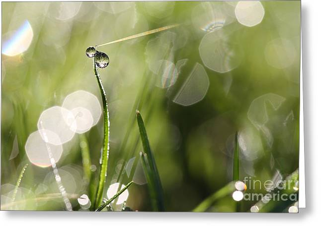 Green Blade Of Grass Greeting Cards - Connections Greeting Card by Jana Behr