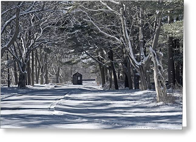 Toll House Greeting Cards - Connetquot State Park Greeting Card by Alida Thorpe