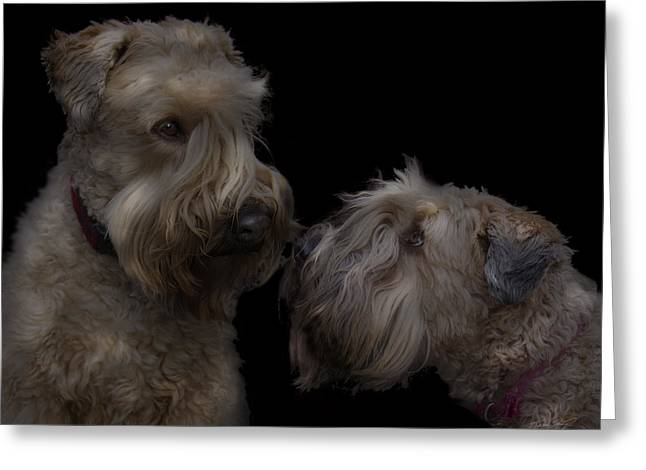 Recently Sold -  - Puppies Digital Greeting Cards - Conor and Bailey - Puppy love Greeting Card by Kevin Doty