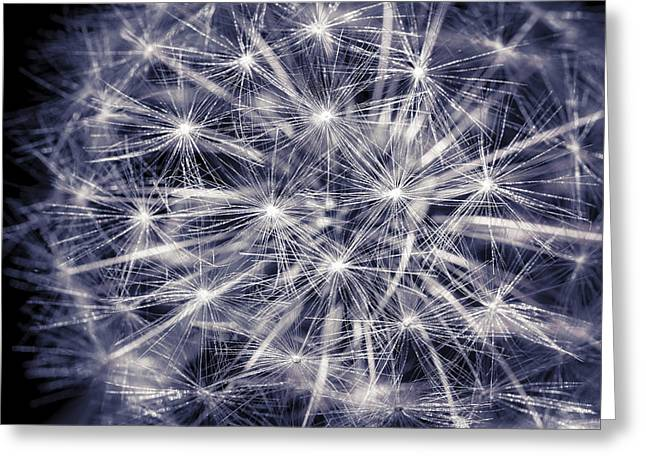 Close Focus Floral Greeting Cards - Constellation Dandelion Greeting Card by Eduard Moldoveanu