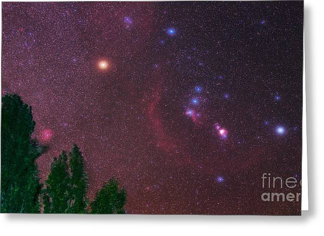 Rosette Greeting Cards - Constellation Orion Greeting Card by Babak Tafreshi