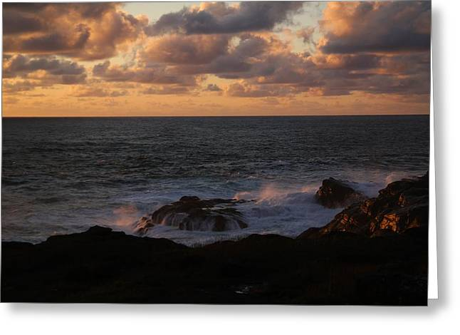 Contemplating In Paradise Greeting Card by Jeff Swan