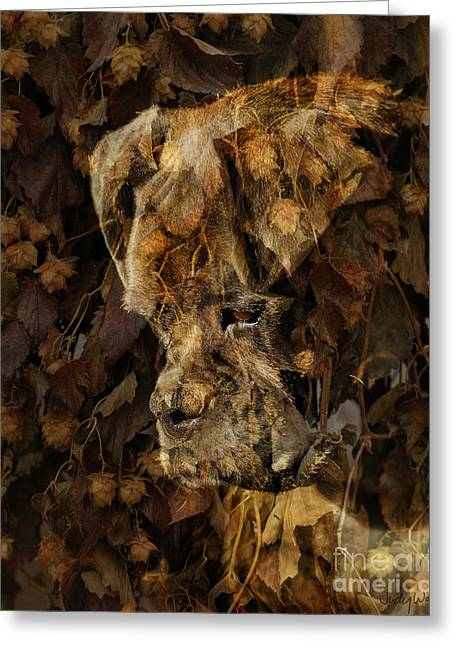 Dogs Digital Greeting Cards - Contemplation Greeting Card by Judy Wood
