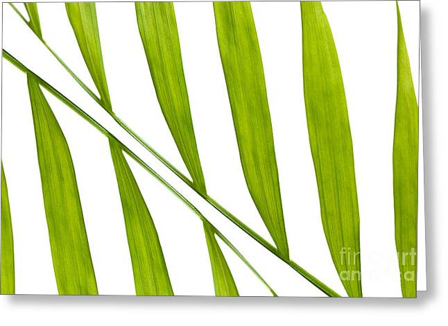 Conservatory Garden Greeting Cards - Contemporary Leaf Design 2 Greeting Card by Natalie Kinnear