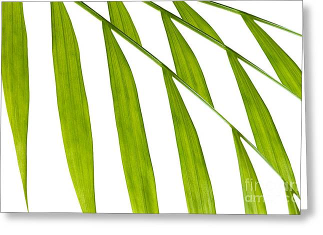 Conservatory Garden Greeting Cards - Contemporary Leaf Design 3 Greeting Card by Natalie Kinnear