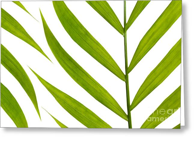 Conservatory Garden Greeting Cards - Contemporary Leaf Design Greeting Card by Natalie Kinnear
