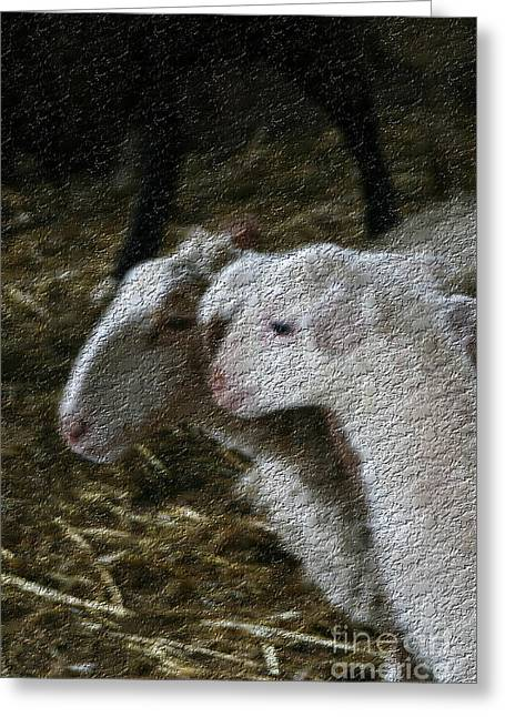 Owner Art Mixed Media Greeting Cards - Contemporary Sheep Greeting Card by Michael Braham