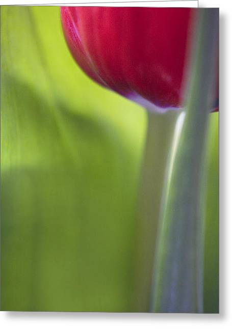 Nature Study Digital Art Greeting Cards - Contemporary Tulip Close Up Greeting Card by Natalie Kinnear