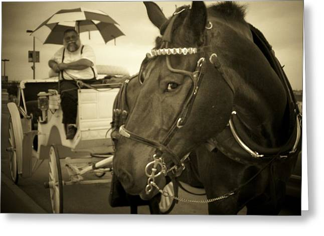 Contemptuous Horse Greeting Card by Teresa Bass