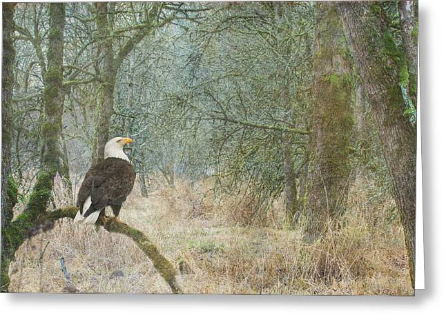 Wildlife Refuge. Greeting Cards - Content and Curious Greeting Card by Angie Vogel
