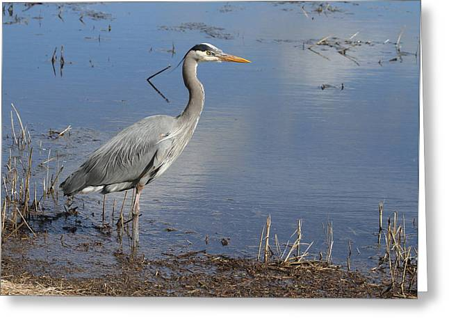 Wildlife Refuge. Greeting Cards - Content Heron Greeting Card by Angie Vogel