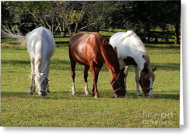 Riding Boots Digital Art Greeting Cards - Content Horses Greeting Card by Angelia Hodges Clay