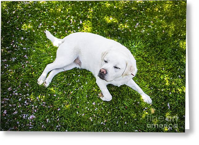 Yellow Dog Greeting Cards - Contented Dog Greeting Card by Diane Diederich