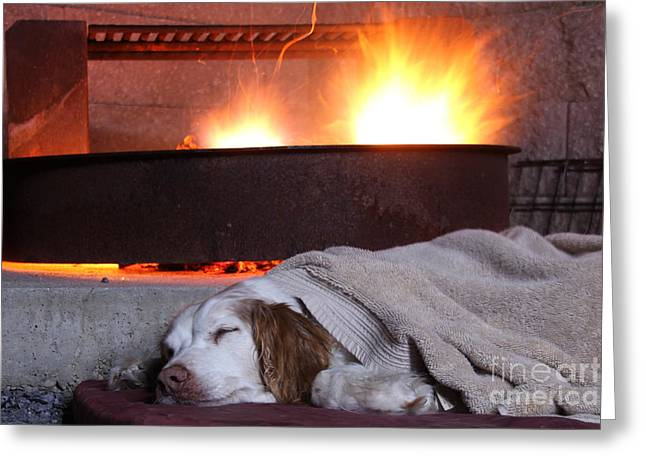 Spaniel Greeting Cards - Contentment Greeting Card by Jemmy Archer