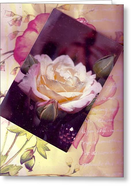 Continuation From Print To Photo Of White Rose Greeting Card by Anne-Elizabeth Whiteway