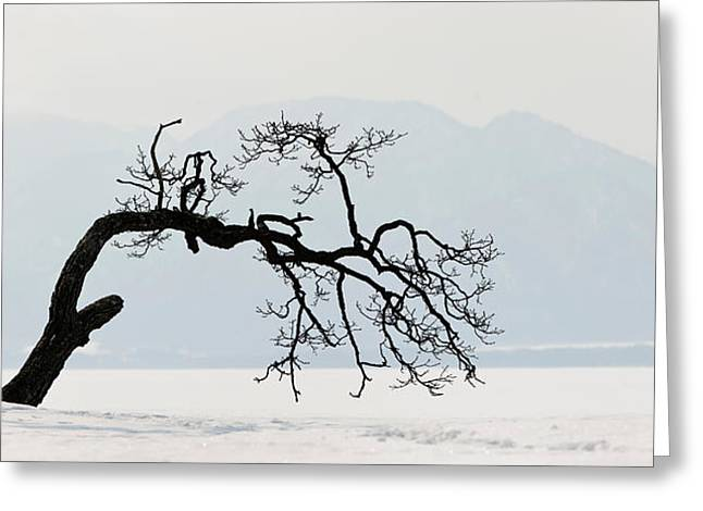 Urban Images Greeting Cards - Contorted Tree At A Frozen Lake, Lake Greeting Card by Panoramic Images