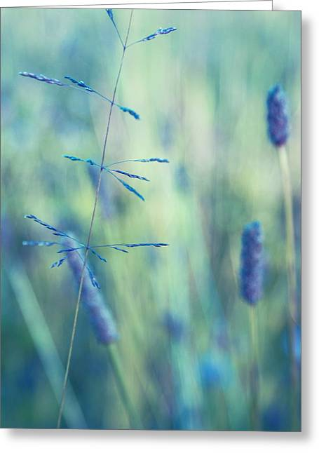 Nature Abstract Greeting Cards - Contrario - s11a Greeting Card by Variance Collections
