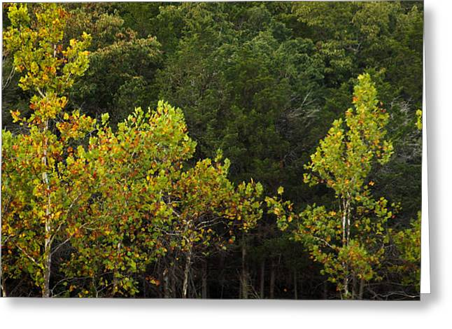 Branson Mo Greeting Cards - Contrast Greeting Card by Laura Wiksten